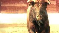 'Matadores', un recorrido por los aspectos más íntimos y misteriosos del mundo del toro