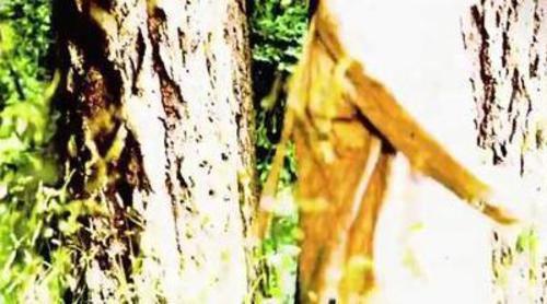 Una loca vaga por el campo en el nuevo teaser de 'American Horror Story: Asylum'
