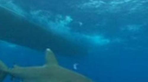 Jesús Calleja se zambulle entre tiburones de puntas blancas en 'Desafío Extremo'