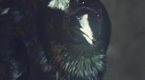 El cuervo de tres ojos vuela por el mundo real ante el regreso de 'Juego de tronos'