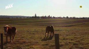 Avance de la nueva entrega de 'Amish, rompiendo las reglas' en Discovery MAX
