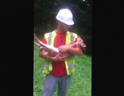 Bebé ciervo que no quiere que dejen de acariciarle la panza