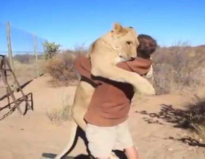 Leona abraza a su cuidador tras seis meses sin verse