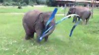 La pequeña elefante Faa Mei se divierte haciendo gimnasia rítmica