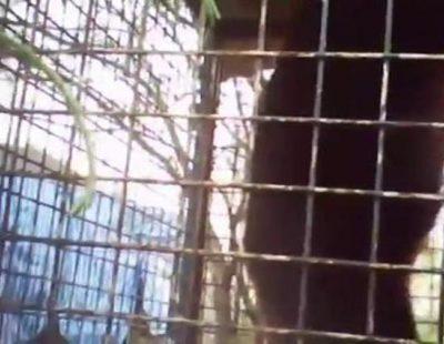 Frank Cuesta continúa denunciando la venta ilegal de animales y la pasividad de la policía