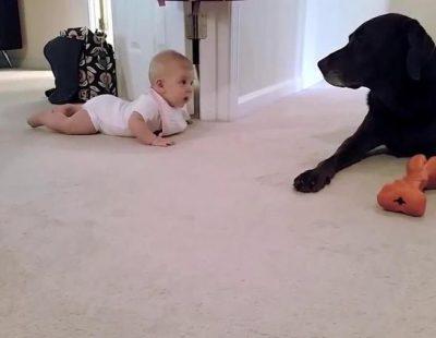 Los primeros gateos de un bebé para llegar a su perro con final feliz