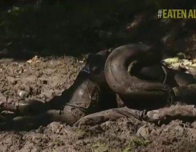 """Así empezó a ser engullido Paul Rosolie por una anaconda en """"Eaten Alive"""""""