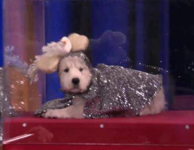 Conan recrea su programa con perritos y recibe a la perra de Lady Gaga